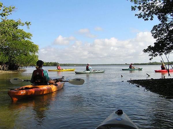 Kayaking Rookery Bay