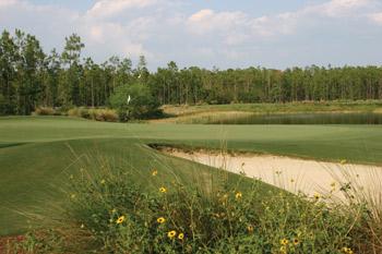 Tiburon No. 16 - The Ritz-Carlton Golf Resort