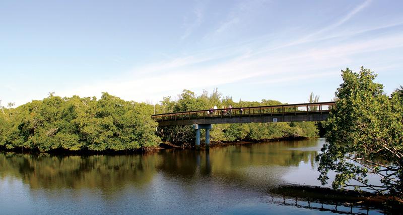 Bridge---Chris-Griffith