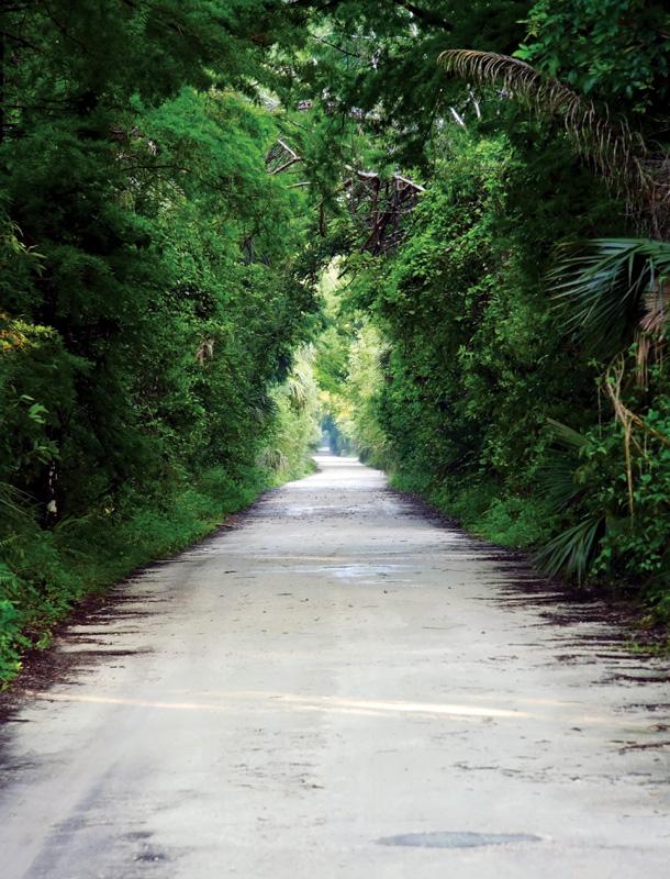 Fakahatchee-Strand-Preserve-State-Park---Janes-Scenic-Drive