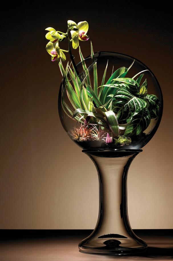 Orchid-Terraium1