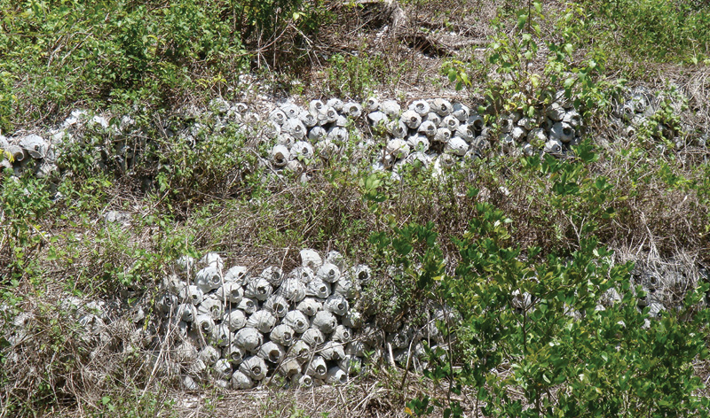 Whelk-Walls---Otter-Mound-Preserve-Trail