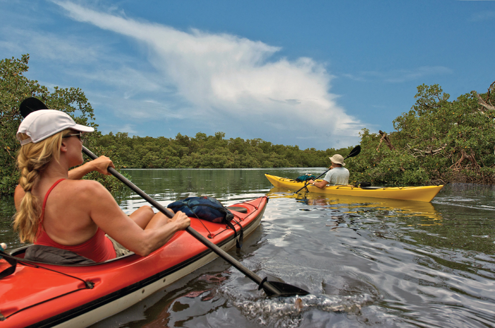 Paddle the Mangroves