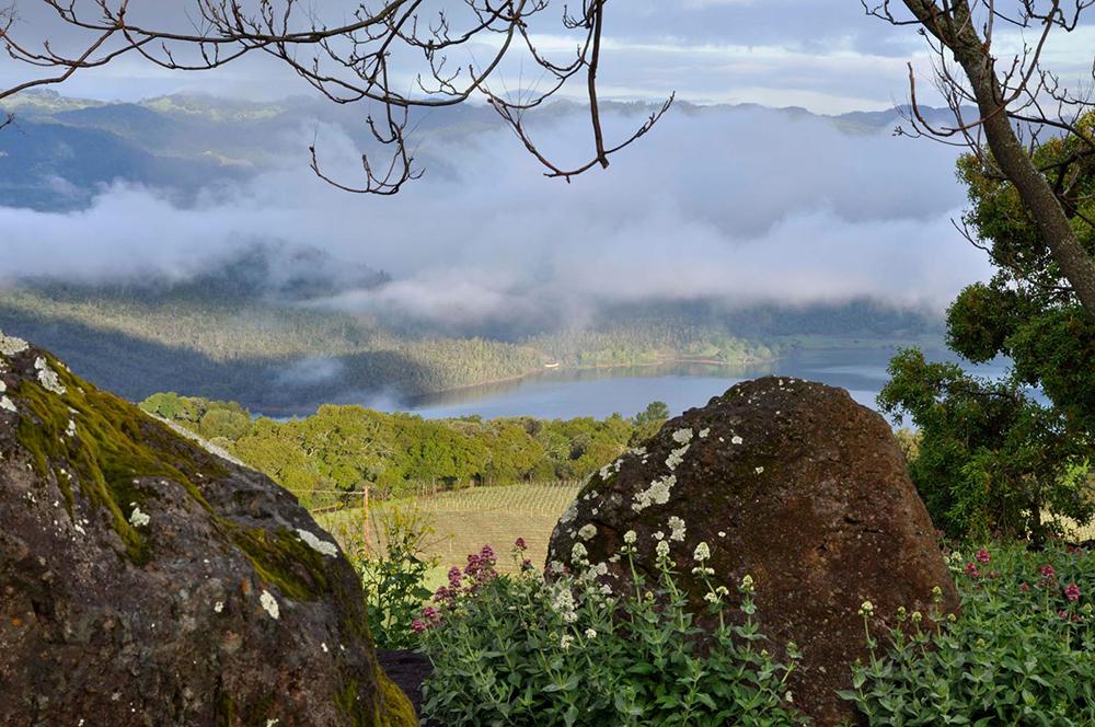 chappellet-vineyard-garden-view